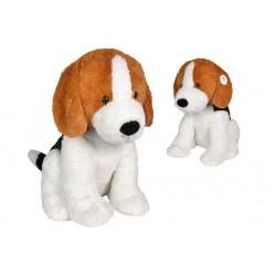 Beagle assis, 80cm